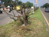 reklame pohon