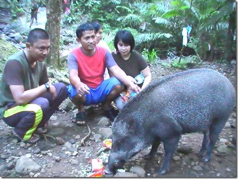 foto bersama babi