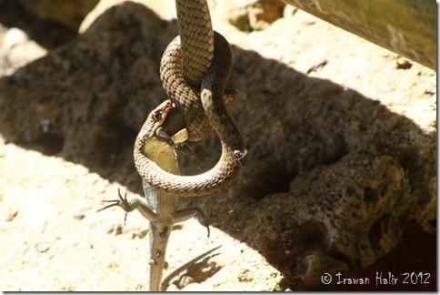 reptil kill reptil