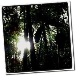 menjelang petang di hutan