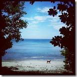 pantai tangkoko (2)