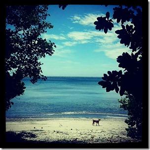 pantai tangkoko (3)