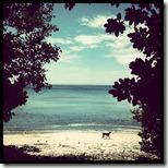 pantai tangkoko (5)