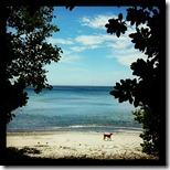 pantai tangkoko (6)