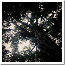 magic tree2