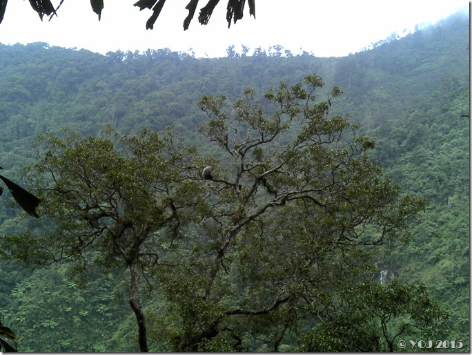 sendiri di puncak pohon