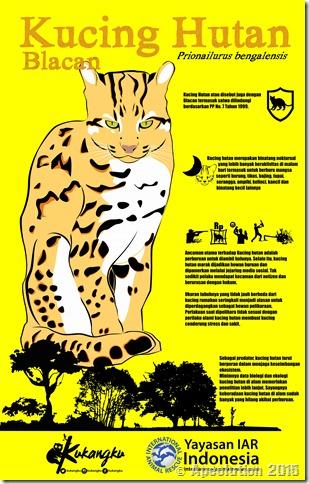 infografis kucing hutan