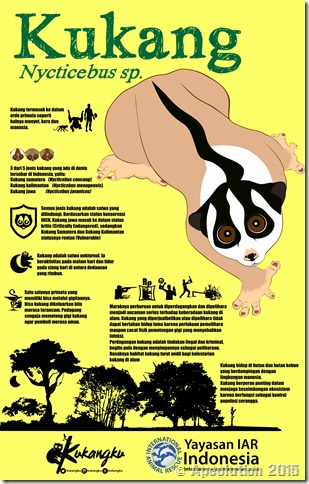 infografis kukang