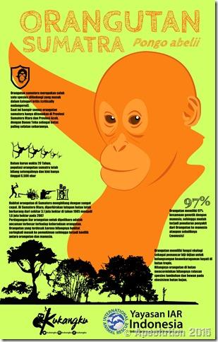infografis orangutan